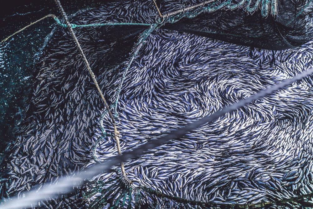 Uhthoff & Zarniko sichert Fischproduktion an der Ostsee