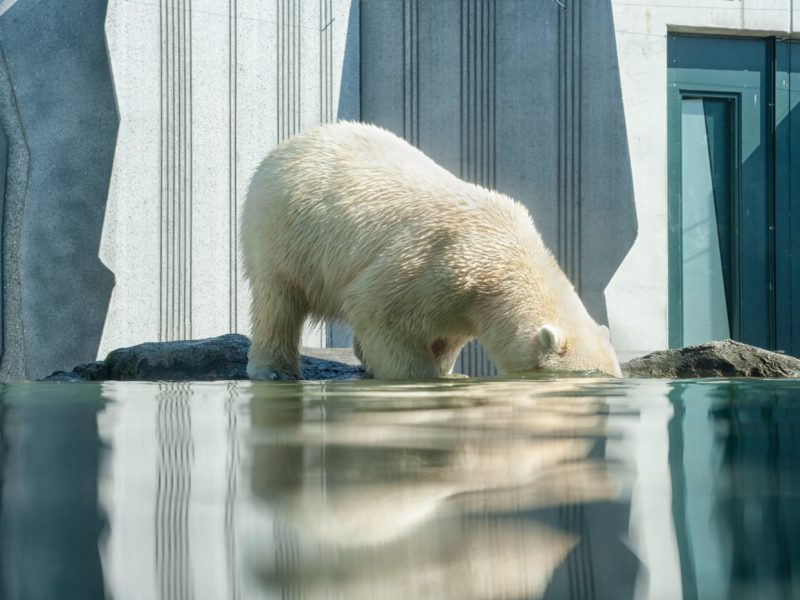 Grabenentwässerung im Eisbärengehege sichergestellt