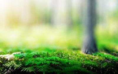 Uhthoff & Zarniko punktet bei Nachhaltigkeitstest